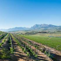Fairview-Vineyards-Paarl